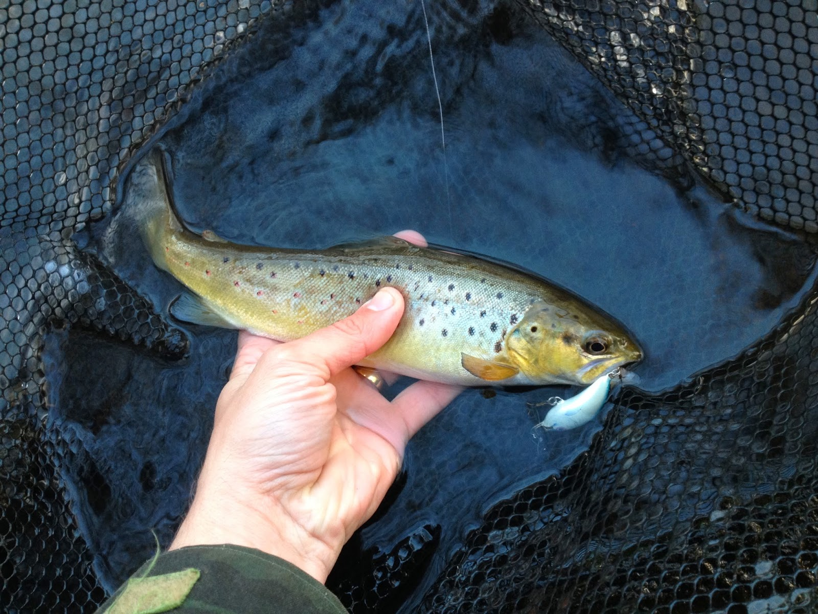 brown trout on ultra light lures ugly duckling lures